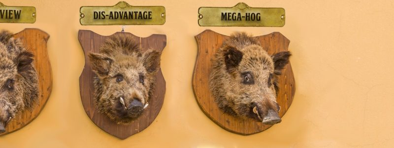 Best Place For Pigs – Stuffed, Mounted, & Hung
